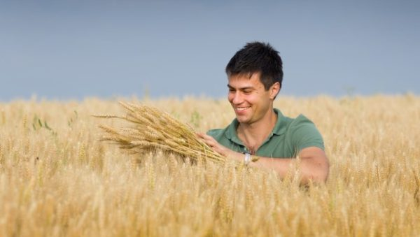 the-growth-of-western-australias-grain-industry-could-be-boosted-b_95_81435_0_14100598_1000-620x350