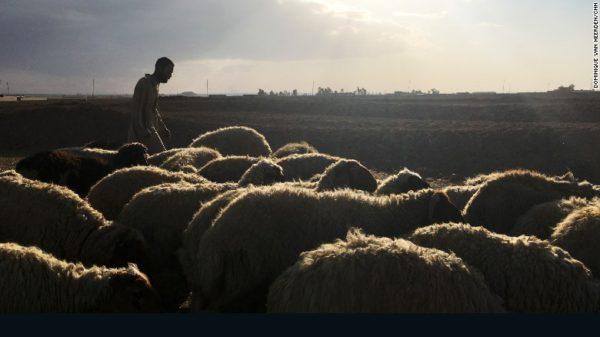 bazwaya-iraq-lost-shepherd-exlarge-169