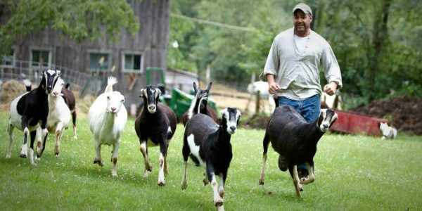bf_header_runninggoats