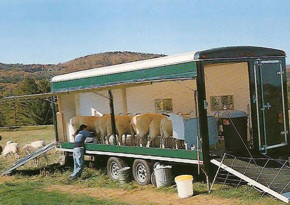 sheep-mobile